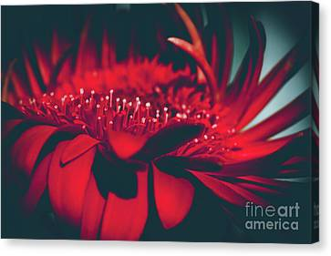 Canvas Print featuring the photograph Red Flowers Parametric by Sharon Mau