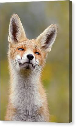 Red Fox At Ease Canvas Print