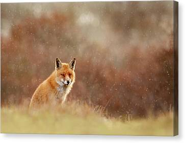 Red Fox In A Snow Shower Canvas Print by Roeselien Raimond