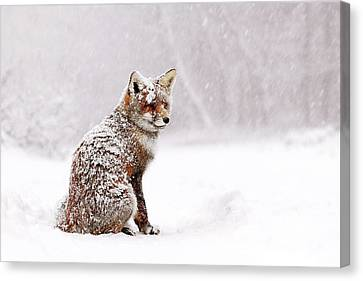 Red Fox In A White Winter Wonderland Canvas Print