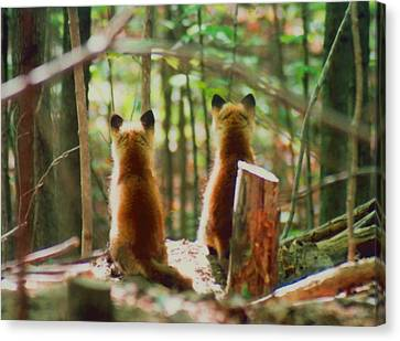 Fox Kit Canvas Print - Red Fox Kits Watching by John Burk