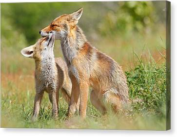 Red Fox Love Canvas Print by Roeselien Raimond