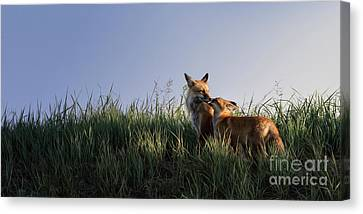 Red Fox Morning Canvas Print