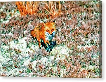 Red Fox On Beach Canvas Print by Geraldine Scull