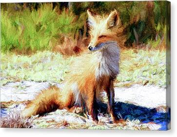 Red Fox Paint Canvas Print by Geraldine Scull
