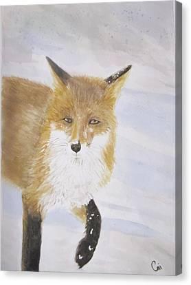 Red Fox Walk Canvas Print by Annie Poitras