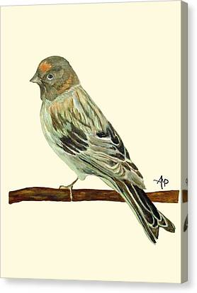 Red-fronted Serin Canvas Print by Angeles M Pomata