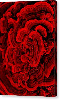 Red Fungi Canvas Print by Dana  Oliver