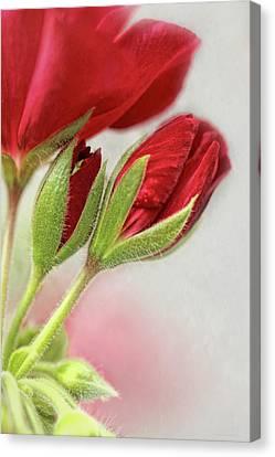 Macro Geranium Flower Canvas Print - Red Geranium Flowers by Jennie Marie Schell