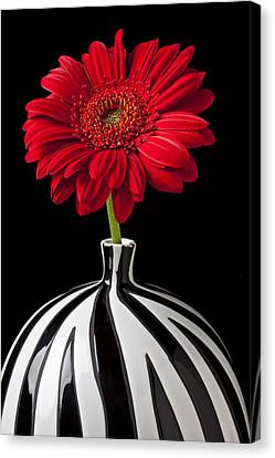Red Gerbera Daisy Canvas Print by Garry Gay
