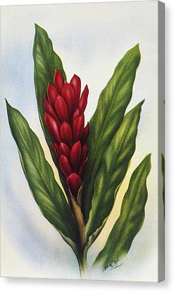 Red Ginger Canvas Print by Hawaiian Legacy Archive - Printscapes