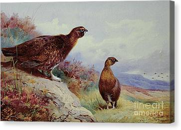 Pheasant Canvas Print - Red Grouse On The Moor, 1917 by Archibald Thorburn