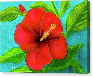 Red Hawaii Hibiscus #238  Canvas Print by Donald k Hall