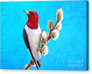 Red Headed Woodpecker Canvas Print