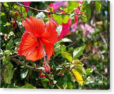 Red Hibiscus In Bright Light Canvas Print