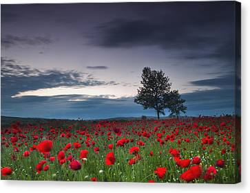 Red Hoods Canvas Print