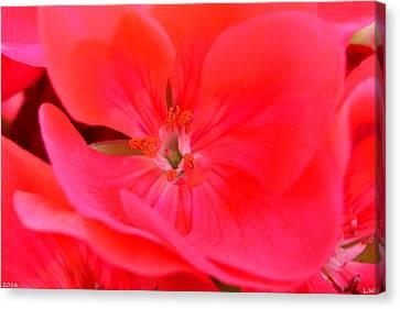 Macro Geranium Flower Canvas Print - Red Hot by Lisa Wooten