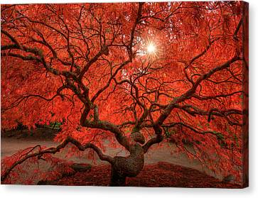 Red Leaf Canvas Print - Red Lace by Dan Mihai