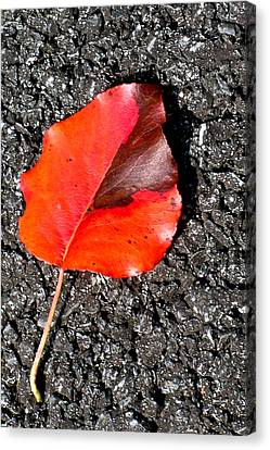Red Leaf On Asphalt Canvas Print by Douglas Barnett