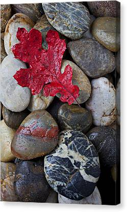 Solid Canvas Print - Red Leaf Wet Stones by Garry Gay