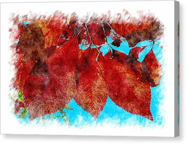 Canvas Print featuring the photograph Red Leaves by Jean Bernard Roussilhe