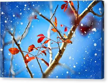 Red Leaves On Blue Background Canvas Print