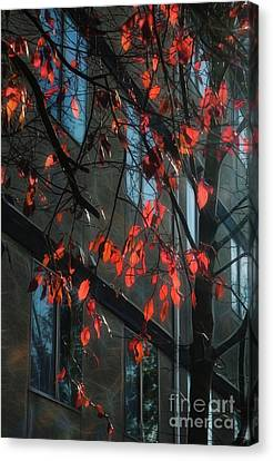 Canvas Print featuring the photograph Red Leaves by Yulia Kazansky