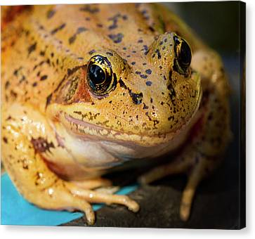Canvas Print featuring the photograph Red Leg Frog by Jean Noren