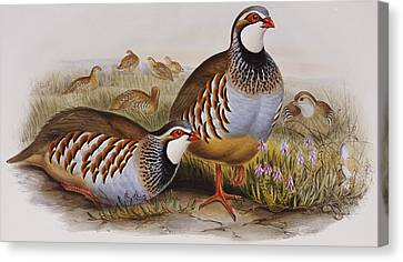 Red-legged Partridges Canvas Print by John Gould