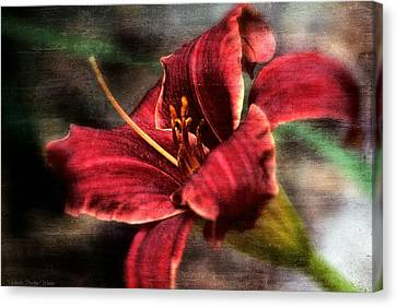 Red Lilly Canvas Print by Michaela Preston