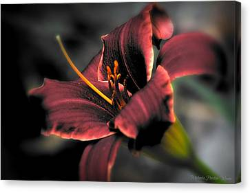 Red Lilly2 Canvas Print by Michaela Preston