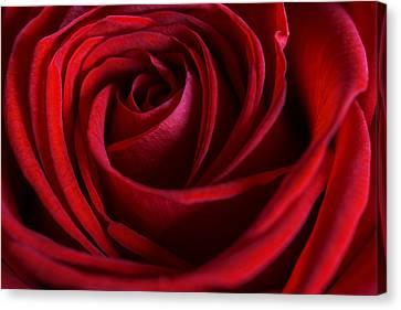 Red Love Canvas Print by Cindy Grundsten