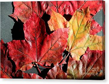 Canvas Print featuring the photograph Red Maple Leaves Digital Painting by Barbara Griffin