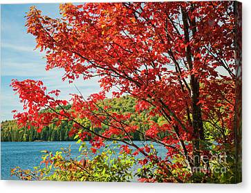 Canvas Print featuring the photograph Red Maple On Lake Shore by Elena Elisseeva