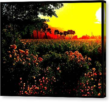 Canvas Print - Red Morn by Cadence Spalding