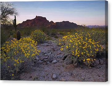 Red Mountain Dusk Canvas Print by Sue Cullumber