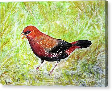 Red Munia Canvas Print by Jasna Dragun