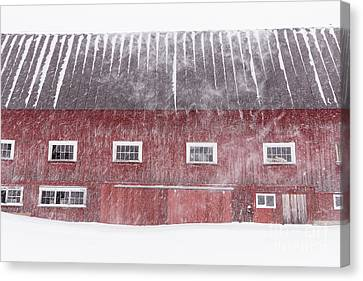 Red New England Cow Barn On Dairy In Winter Storm Canvas Print
