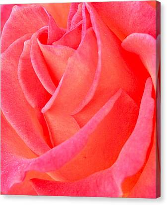 Red No More Canvas Print by Gwyn Newcombe