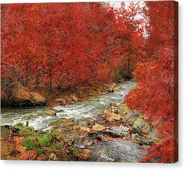 Red Oak Creek Canvas Print