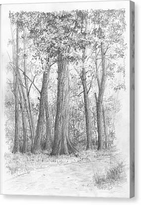 Red Oak Canvas Print