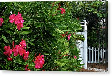 Canvas Print featuring the photograph Red Oleander Arbor by Marie Hicks