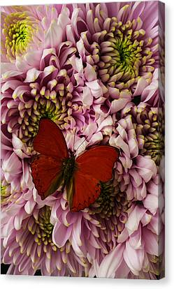 Red On Pink Canvas Print by Garry Gay