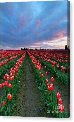 Red On Red Canvas Print by Mike Dawson