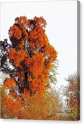 Red-orange Fall Tree Canvas Print