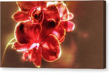Canvas Print featuring the photograph Red Orchid by Isabella F Abbie Shores FRSA