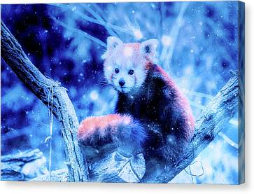 Red Panda Canvas Print by Ractapopulous