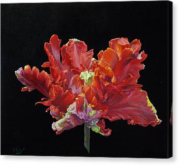 Red Parrot Tulip - Oils Canvas Print by Roena King