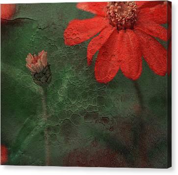 Red Passion... Canvas Print by Juliana Nan