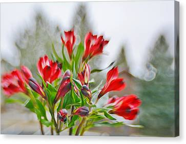 Canvas Print featuring the photograph Red Peruvian Lilies by Diane Alexander